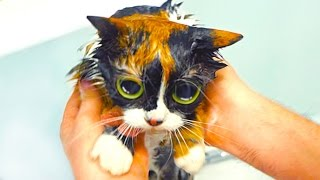 видео уход за кошками