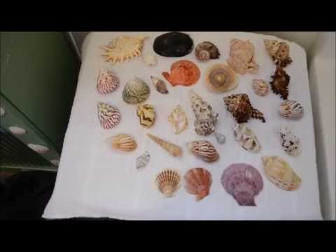 Muriatic Acid Wash on Seashells