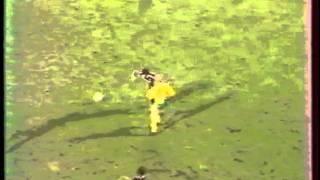 Metz - Nantes 0-4 - Saison 1982-1983