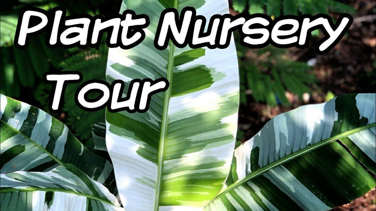 Tropical Plant Nursery Tour In Bangkok
