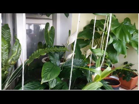 #299.Полезные-неполезные растения...чисто мое мнение.
