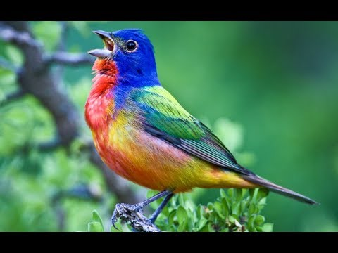 Вопрос: Что вы знаете о птице Суракаф В чем ее феномен и особенность?