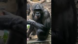 Amali's 1st Birthday - Cincinnati Zoo