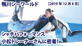 シャチパフォーマンス 小松トレーナーさんに密着!【鴨川シーワールド 2019年12月8日第1ステージ】