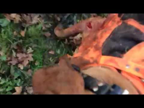 Sanglier de 106 kgs , Posavatz , Griffons Bleus et Briquet