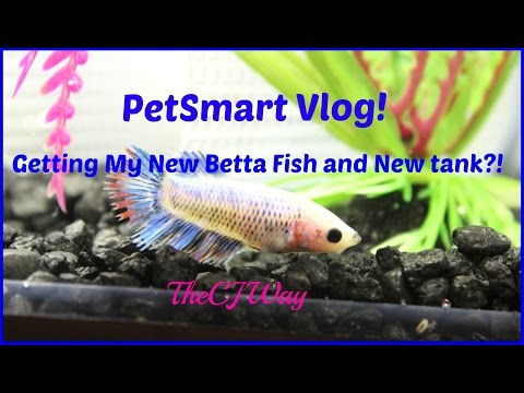 Petsmart vlog getting my new fish doovi for Does petco sell fish