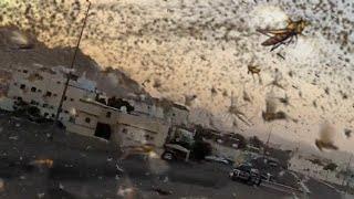 جيوش مهولة من الجراد تغزو المدينة المنورة ! وعواصف ترابية رهيبة تجتاح القصيم ، السعوديةة