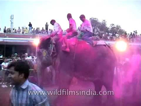 playing-with-colors-while-riding-on-an-elephant-during-holi