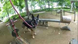 愛犬チェリーさんと長野の家へ行ってきたよ!!色んな所へ一緒に行って...