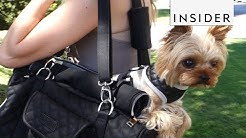 Stylish Pet Carrier For Small Dogs