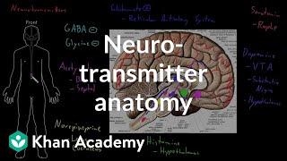 Neurotransmitter anatomy | Organ Systems | MCAT | Khan Academy