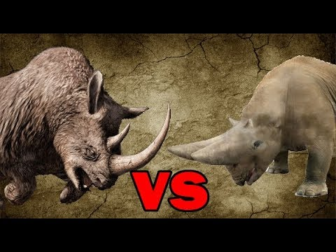 Woolly Rhinoceros vs Arsinoitherium