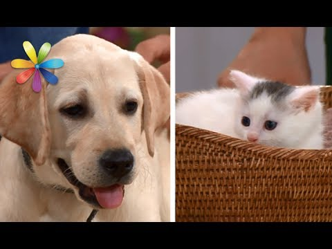 Что лучше для ребенка кот или собака