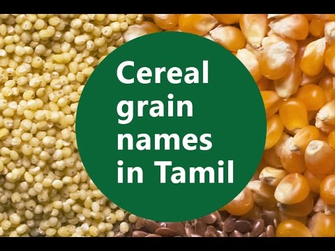 Basic Level - Part 3 - Cereal grain Names