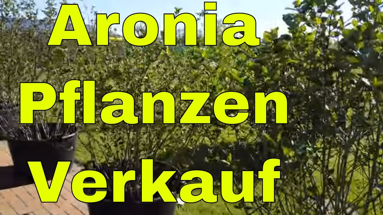 aronia pflanzen f r den garten aronia pflanzen nero auch im k bel youtube. Black Bedroom Furniture Sets. Home Design Ideas