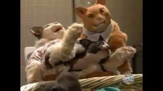 TV Funhouse Cat Giving Birth