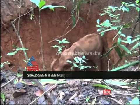 Funny video of little elephant escaping from a pit
