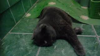 Кот спит)