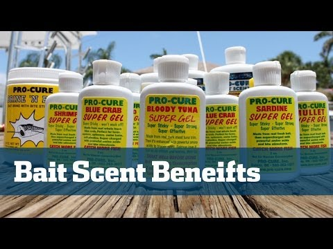 Bait Scents; How To Select The Best Bait Scents - Florida Sport Fishing TV