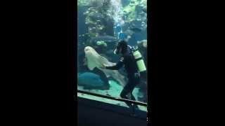 Акулы как кошки - тоже любят ласку