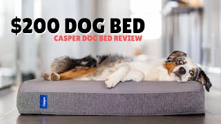 I Bought A $200 Dog Bed   Casper Dog Bed Review
