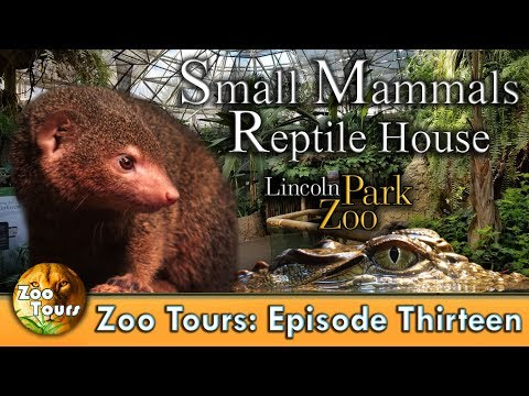 Zoo Tours Ep. 13: Small Mammal-Reptile House at the Lincoln Park Zoo