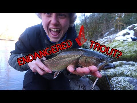 I Caught An Endangered Trout! -- (Oregon Trout Fishing)