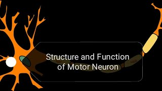 STRUCTURE AND FUNCTION OF MOTOR NEURON (O LEVEL and A LEVEL)
