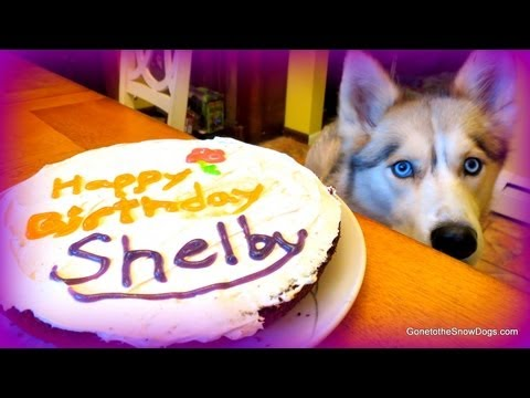 BIRTHDAY CAKE For The Dog Homemade How To Dog Birthday Cake Recipe   Snacks With The Snow Dogs 20