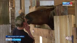 Смотреть видео «Мезенки» Кенозерья примут участие в Международной конной выставке онлайн