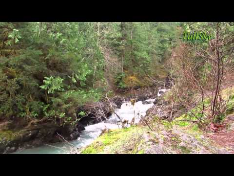 Virtual Hike: Olympic National Forest (actual sound) WA State 18min (#10A)