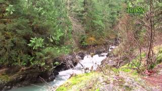 VIRTUAL HIKE: 38 Minutes Olympic National Forest, Washington State