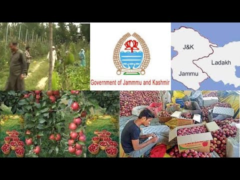 India_ Government introduces scientific ways for apple farming