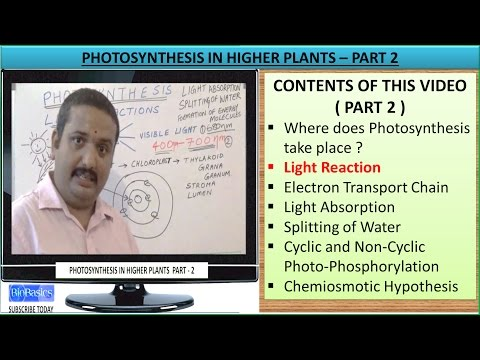 Photosynthesis in Higher Plants for class 11 part 2