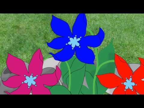 Аленький цветочек - смотреть онлайн мультфильм бесплатно в