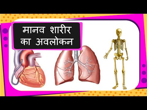 Science - Human Body Parts and Organs Introduction (for children ...