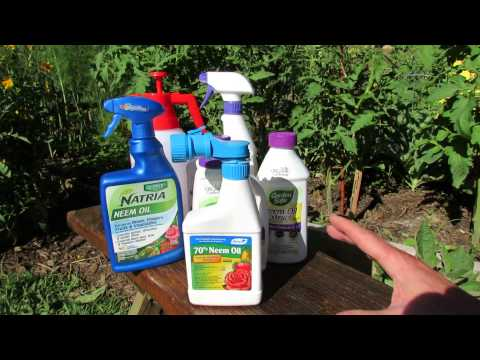 How Does Neem Oil Work, Insect Examples & Making Your Own Neem Oil Spray: Save Money! - TRG 2014 from YouTube · High Definition · Duration:  11 minutes 36 seconds  · 242.000+ views · uploaded on 18-6-2014 · uploaded by Gary Pilarchik (The Rusted Garden)