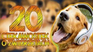 20 CIEKAWOSTEK O ZWIERZĘTACH!