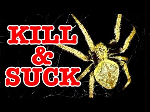 Big Scary Spider What A Horrible Way To Die (GRAPHIC VIDEO)