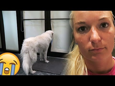 Dogs React: Home Alone with Chels (SCS #169)