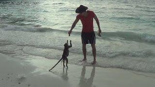 MONKEY BEACH, Koh Phi Phi, Thailand (free monkeys)