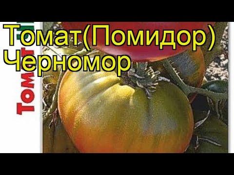 Томат Черномор. Краткий обзор, описание характеристик solanum lycopersicum Chernomor