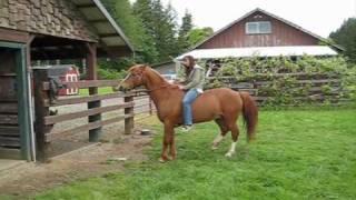 Kelly's Horse,