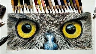 色鉛筆で目を描いてみた フクロウさん Draw an Owl Eye