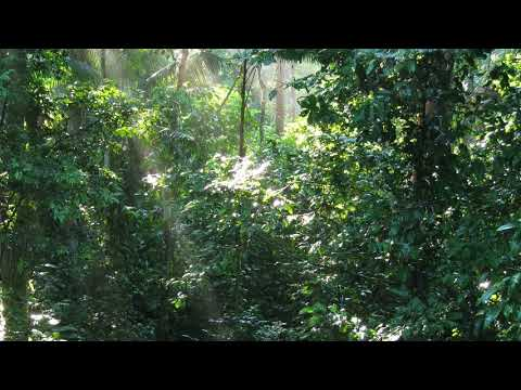 Relaxing Sounds of the Peruvian Amazon Jungle - 8 Hour Audio