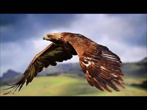 What is the meaning of dreaming with a hawk? - YouTube