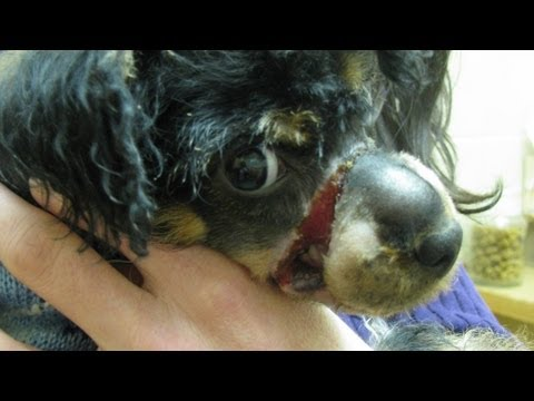 Dying puppy found in a frozen box is rescued