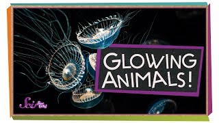 Glowing Ocean Animals!