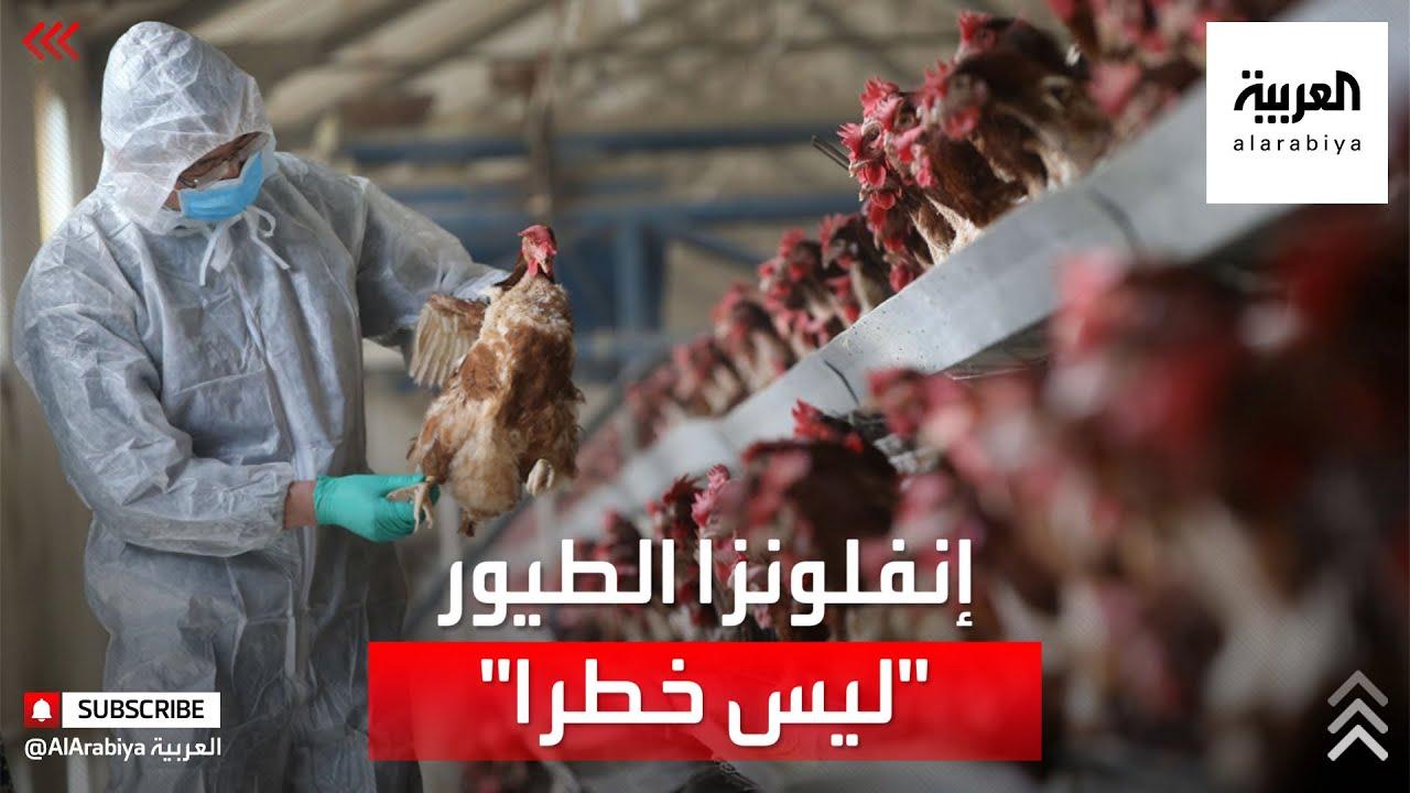 منظمة الصحة العالمية تقلل من خطر إنفلونزا الطيور  - 20:58-2021 / 3 / 1
