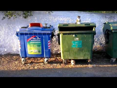 Straying wild cats looking for food in waste bins (Corfu / Greece) (Katzen im Müllcontainer)